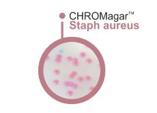 CHROMagar Staph aureus