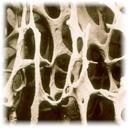Маркеры метаболизма костной ткани