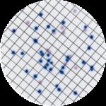 Хромогенные среды CHROMagar для научных исследований:
